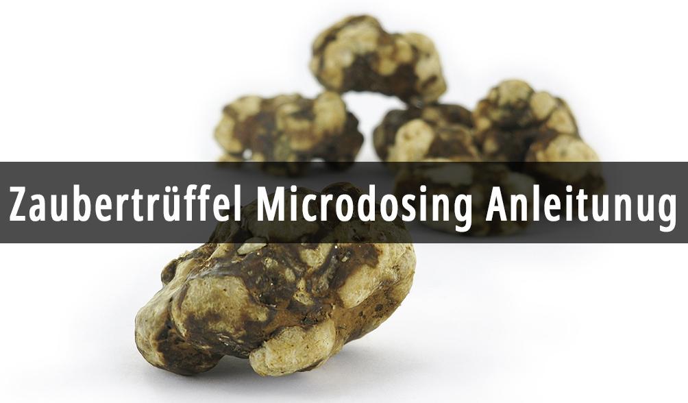 Microdosing Pilze
