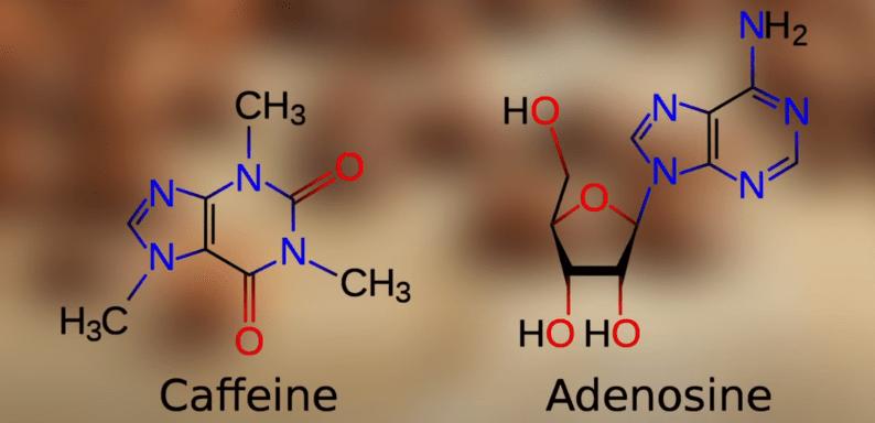 LSD Microdosing Kaffee Koffein kombinieren